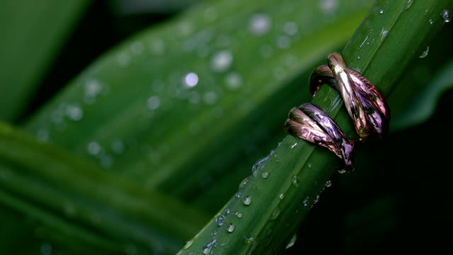 vídeos de stock e filmes b-roll de beautiful wedding ring and engagement ring, 4k. - anel joia