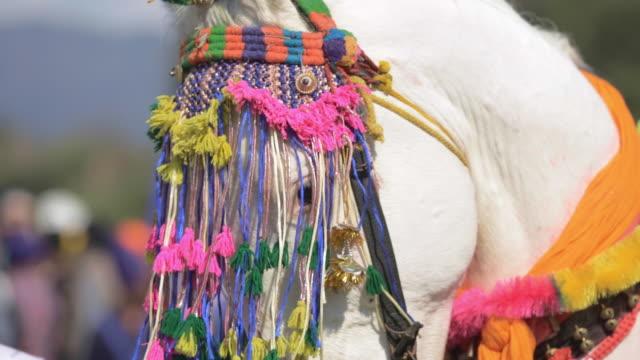beautiful white horse at hola massala - tassel stock videos & royalty-free footage