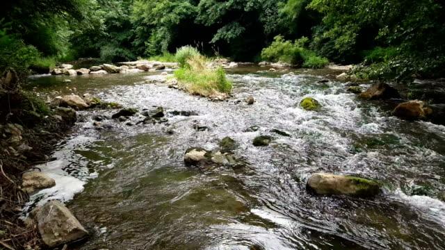 vídeos de stock e filmes b-roll de beautiful wild river - água livre