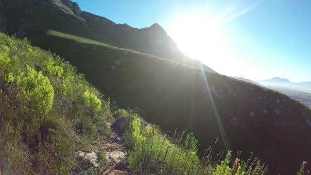 beautiful wilderness area - wilderness area stock videos & royalty-free footage