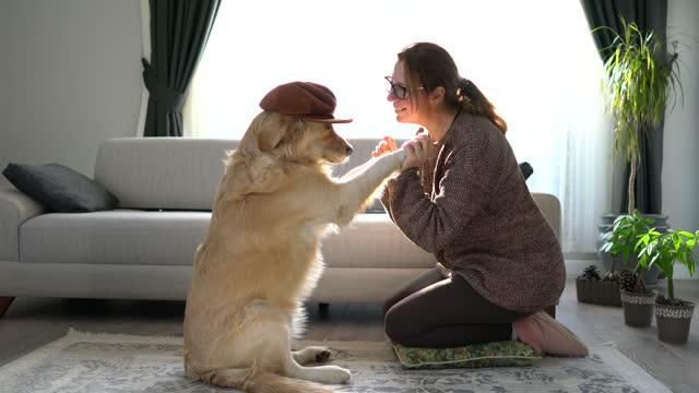 vídeos de stock e filmes b-roll de beautiful woman doing high five her adorable golden retriever dog . - adulto