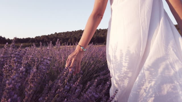 美人のslo moがラベンダーの花を愛撫 - 夢点の映像素材/bロール
