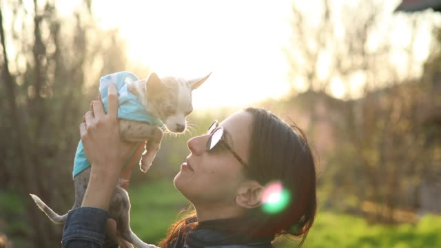 beautiful woman kissing her chihuahua puppy - pet owner stock videos & royalty-free footage