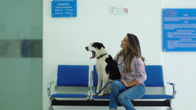 beautiful woman with her mixed breed dog at the veterinary and then loving vet caressing dog at the waiting room - vet stock videos & royalty-free footage