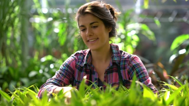 beautiful woman working at a vivarium checking the leaves looking very happy and smiling - garden center stock videos and b-roll footage