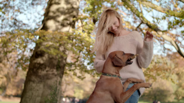 stockvideo's en b-roll-footage met beautiful women in her mid thirties with long blond hair is enjoying time together with her brown dog  -  shot-3 - alleen één mid volwassen vrouw
