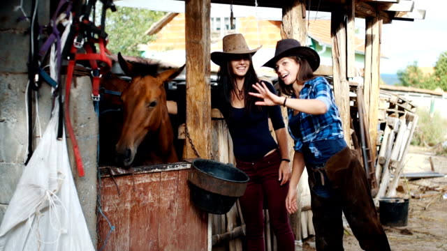 vídeos de stock, filmes e b-roll de mulheres bonitas de estimação cavalos no estábulo - pet clothing
