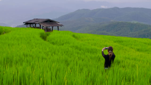 vídeos de stock e filmes b-roll de beautiful women taking photo with smartphone at rice paddy in northern of thailand - explorador