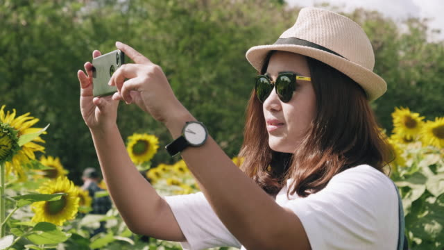 beautiful women taking photo with smartphone at sunflower plant - photo shooting stock videos and b-roll footage