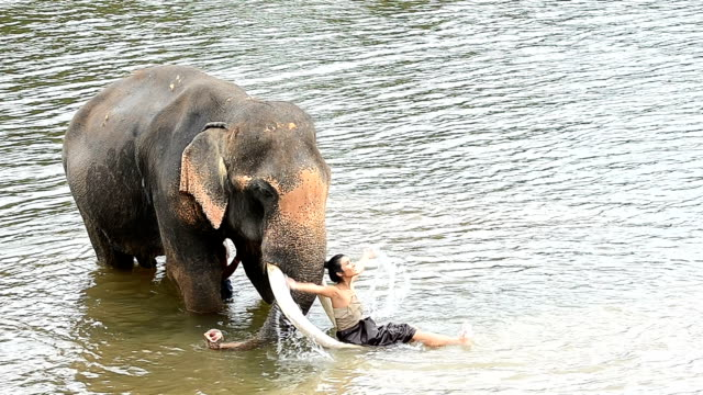 Verbazingwekkend 80 Hochwertige Elephant People Video-Clips und Filmmaterial KY-43