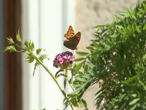 beautiful yellow butterfly - invertebrate stock videos & royalty-free footage