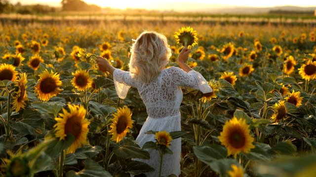 beautiful young woman in sunflower field - sunflower stock videos and b-roll footage