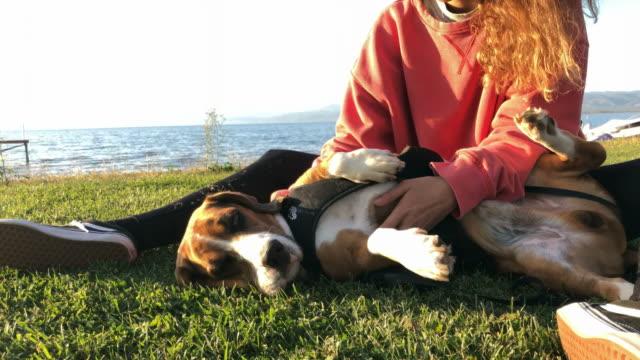vídeos y material grabado en eventos de stock de hermosa mujer joven jugando con su perro basset hound - perro cazador