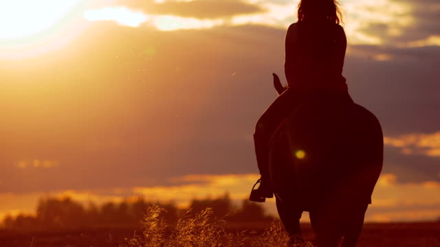 Beautiful young woman riding horse in the sunset.