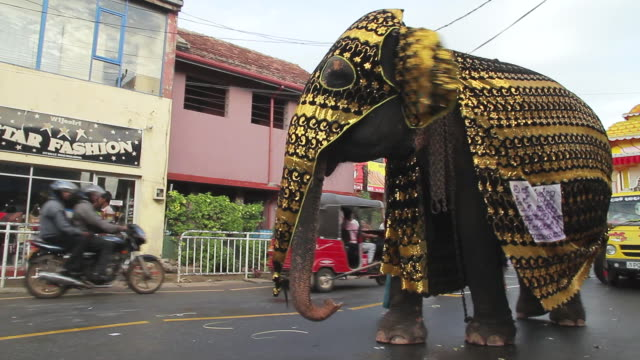 stockvideo's en b-roll-footage met ms pan beautifully adorned elephant parades in seenigama annual perahern parade in buddhist procession audio / sinigama, southern province, sri lanka - sri lankaanse cultuur