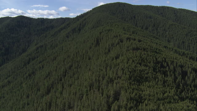 Beautifully wooded mountains fill Yellowstone National Park. Available in HD.