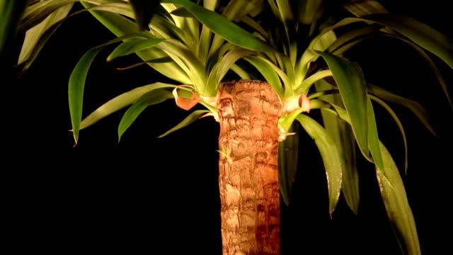 vídeos de stock, filmes e b-roll de flor de beleza - arbusto tropical