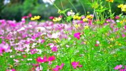 beauty flowers.