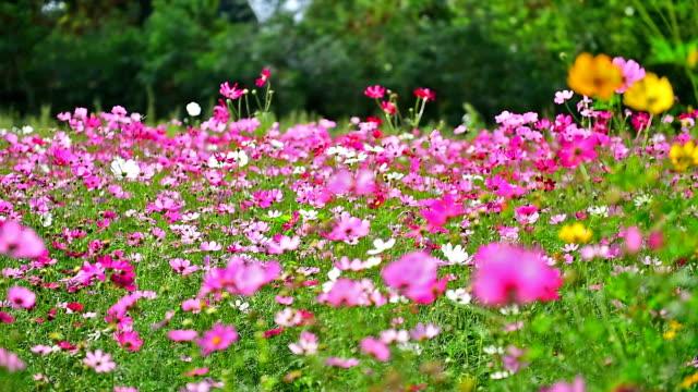 beauty flowers. - meadow stock videos & royalty-free footage