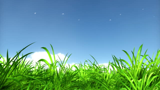beauty grass. luma matte - cloud matte stock videos & royalty-free footage