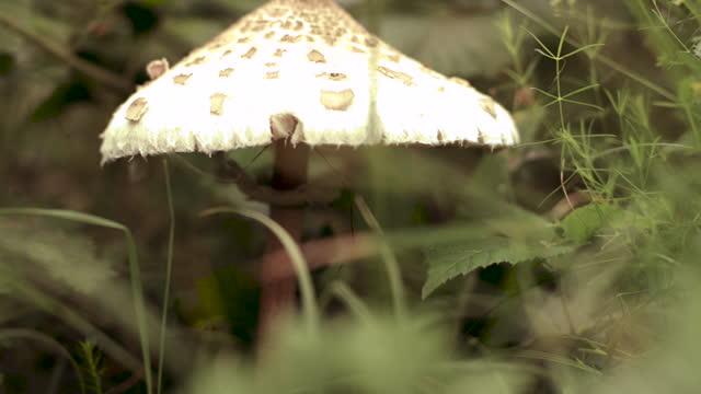 vídeos y material grabado en eventos de stock de belleza en la naturaleza - parasol accesorio personal