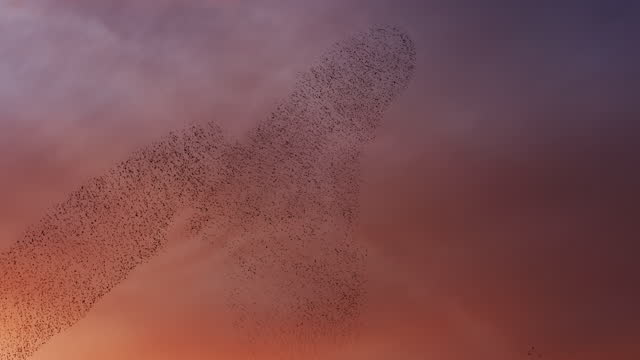 beauty murmuration of starlings at sunset - real time footage stock videos & royalty-free footage