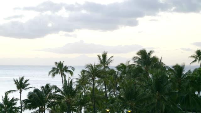 Palmiers de beauté dans le mouvement lent 4K