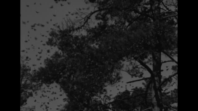 beauty shot sun setting behind trees / vs hundreds of monarch butterflies flutter away from tree branches / man holds one stretched out in his hand /... - migrating stock videos & royalty-free footage