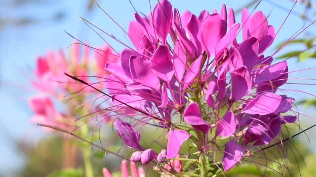 vídeos de stock, filmes e b-roll de beautyful flor roxa - jardim de versailles