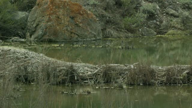 5k beaver dam 2 - beaver dam stock videos and b-roll footage