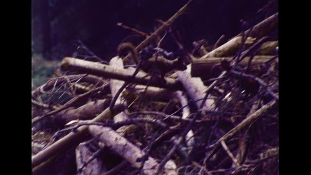 Beaver dam across pond lake squirrel running across twigs sticks VS Water stream running over rocks logs shoreline w/ vegetation leaves plants...