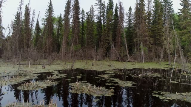 beaver habitat - 寒帯林点の映像素材/bロール