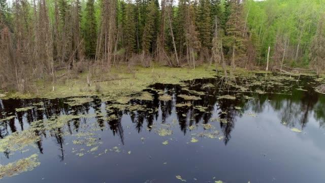 vídeos y material grabado en eventos de stock de beaver habitat - beaver dam