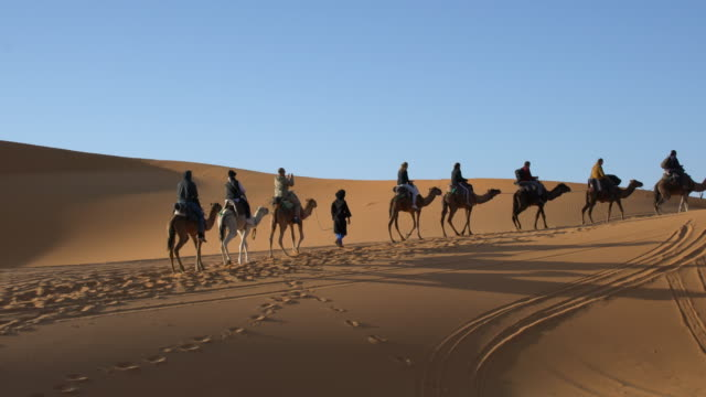 Bedouin Berber in blue clothes leading a Sahara camel caravan with tourists among the dunes of Erg Chebbi, Saharan Morocco