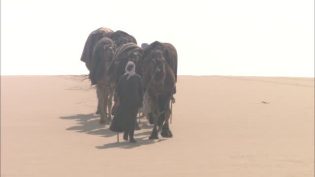 a bedouin leads a camel caravan across the desert. - nomadic people stock videos & royalty-free footage