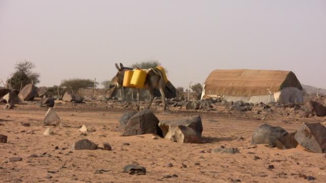 ws bedouins and camel walking in desert / tzarga, adrar, mauritania - mauritania stock videos & royalty-free footage