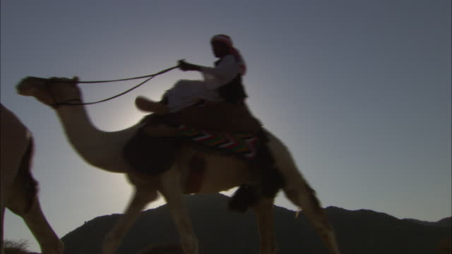 bedouins ride camels across wadi abu greiya, egypt. - convoy stock videos and b-roll footage
