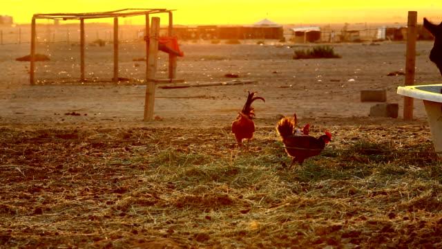 bedouins - by bildbanksvideor och videomaterial från bakom kulisserna