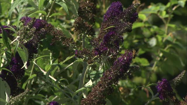 vídeos y material grabado en eventos de stock de bee and flower, aero, denmark - grupo mediano de animales