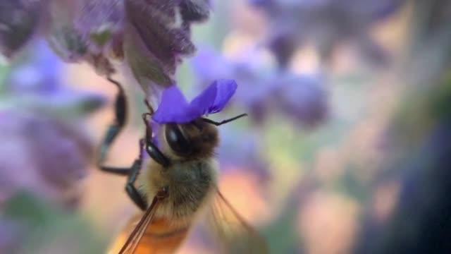 ビーと花 - ブンブン鳴る点の映像素材/bロール