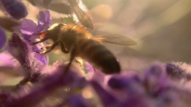 bee and flower - pollen stock videos & royalty-free footage