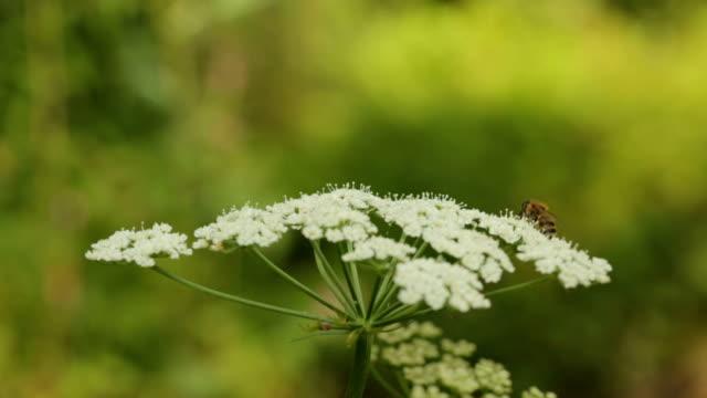 Bee Behavior