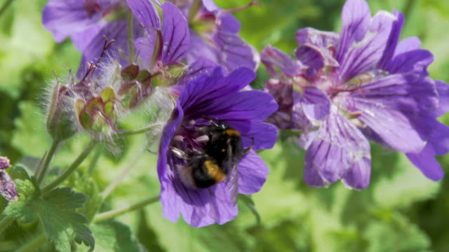 Bee collecting pollen from a flower