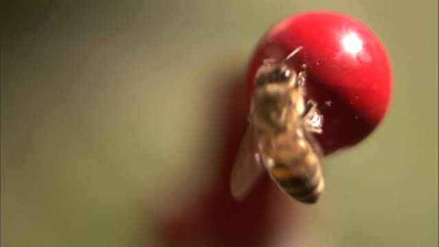 a bee crawls over the end of a red handle. - gliedmaßen körperteile stock-videos und b-roll-filmmaterial
