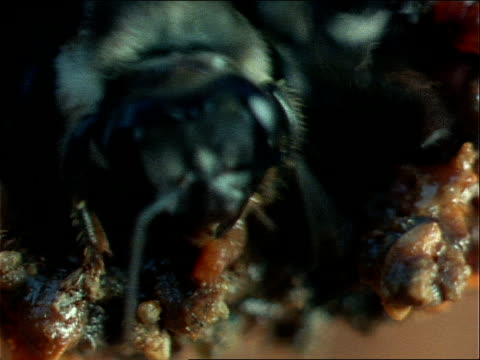 stockvideo's en b-roll-footage met a bee diligently works to build a hive. - ongewerveld dier