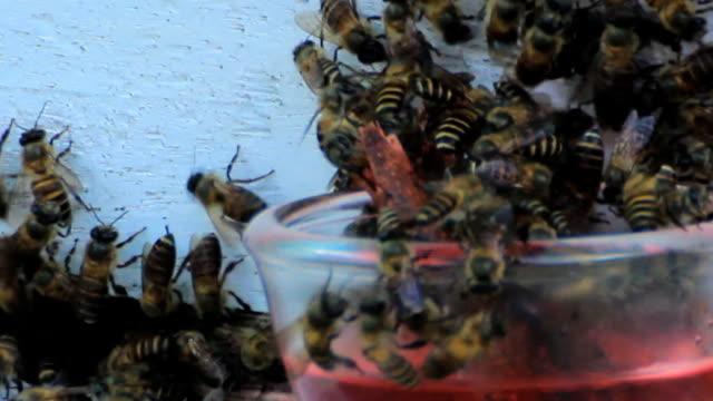 vidéos et rushes de abeille manger - création animale