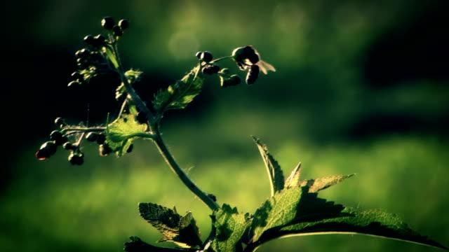 HD - Bee flying around flower