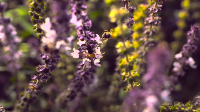 Bee Flying Around Flower