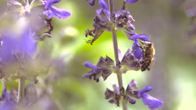 bee flying around flower - 30 seconds or greater stock videos & royalty-free footage