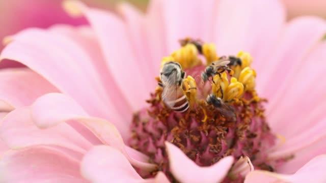 vídeos y material grabado en eventos de stock de reunión de abeja polen de la flor. - abeja